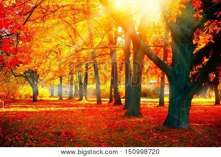 Autumn. Fall scene. Beautiful Autumnal park. Beauty nature scene. Autumn landscape, Trees and Leaves