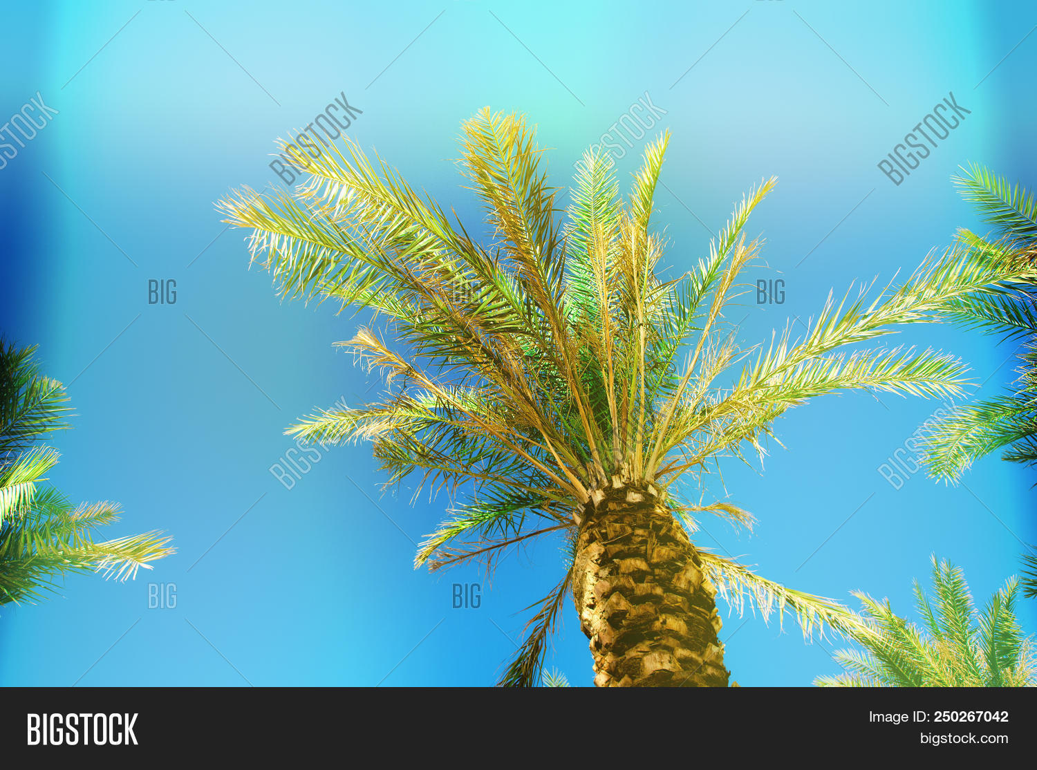 🔥 Palms With Colorful Pop Art Effect  Vintage Stylized