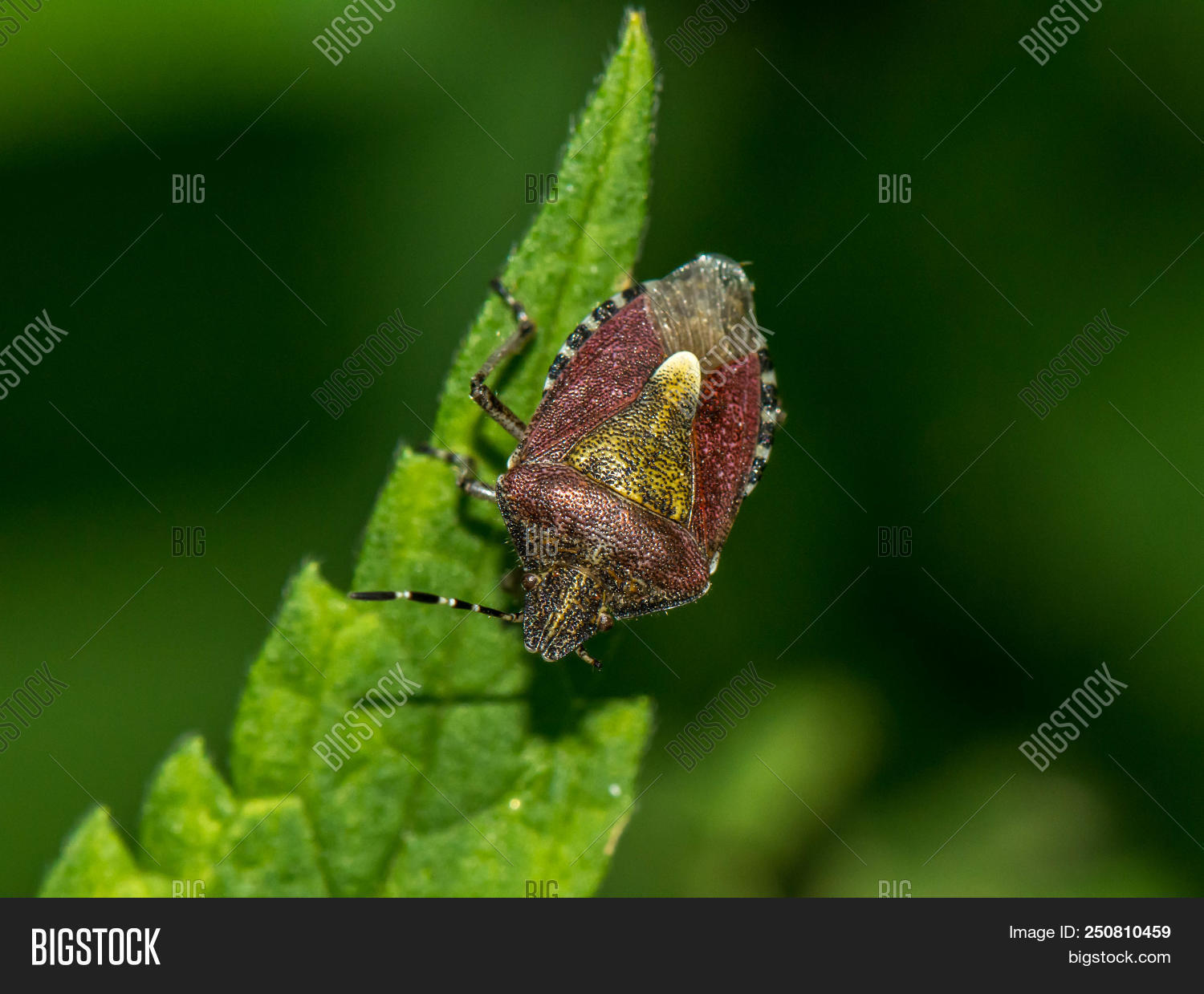 animal,autumn,background,beauty,berry,bright,brown,bug,caucasus,close-up,colorful,crimson,exciting,flat,flower,fragrant,fruit,furry,garden,gorgeous,green,hairy,incredible,inhabitant,joy,leaf,lengthened,macro,mysterious,nature,nice,ornament,pattern,rare,raspberries,red,scary,scratchy,secretive,smelled,smelly,spotted,spring,striped,suck,summer,tendrils,texture,vegetable,wood