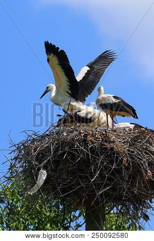 storks sitting in nest. Peaceful birds on background of blue sky.  Stork nest on blue sky background stock photo