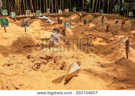 Labels with tortoise type and days egg is in the sand, in sea turtle hatchery stock photo