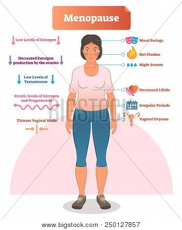 Menopause labeled vector illustration. Medical scheme and diagram with list of estrogen, ovaries, testosterone and progesterone symptoms. Anatomical explanation set of mood swings, libido and periods. stock photo