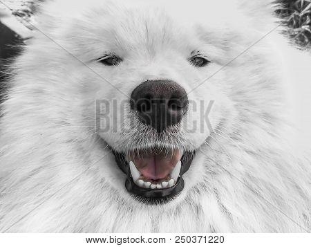 Dog close-up, pet, pet pitiful dog look, nimal stock photo