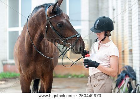 Groomer horsewoman taking care of chestnut horse hoof. Outdoors multicolored horizontal image. stock photo