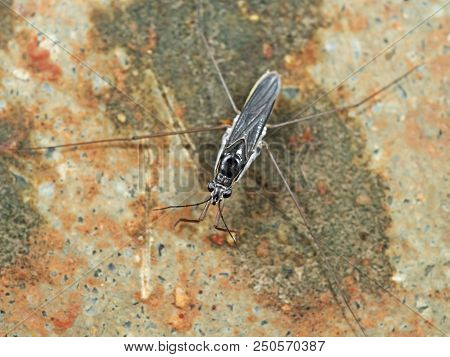 Macro Photography of Water Strider on the Surface of Shallow Water stock photo