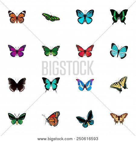 Set of moth realistic symbols with lexias, papilio ulysses, painted lady and other icons for your web mobile app logo design. stock photo