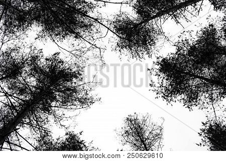 Black unsharp contours of trees in the sky above the head. Halloween holiday background. stock photo