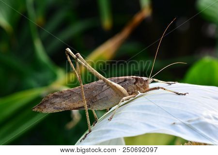 Long-legged katydid on a plant in the garden jungle. stock photo