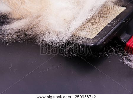 Closeup dog hair fallen after groomind and comb,put on black board,in abstract art design,blurry light around stock photo