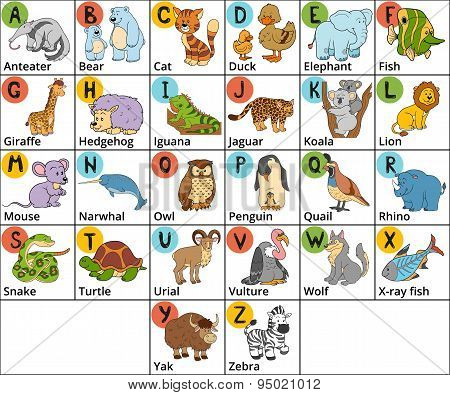 stock photo of vector color zoo alphabet with cute animals on