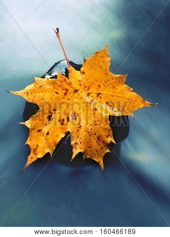The Colorful Broken Leaf From Maple Tree On Basalt Stones In Blurred Water-Dishwasher Magnet Skin (size 24x24)