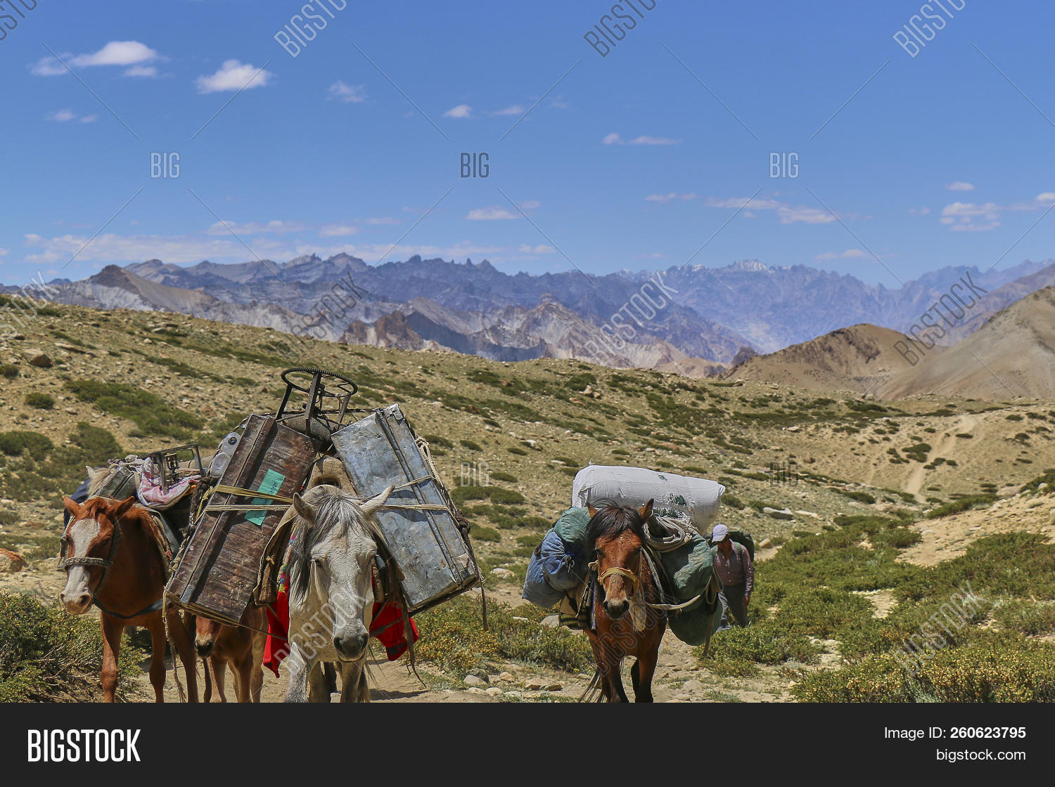 animal,blue,burden,carry,domestic,donkey,group,harness,heavy,high,hike,hiking,himalaya,horse,india,indian,jammu,kangri,kashmir,labour,ladakh,landscape,leh,load,luggage,mammal,markha,mountains,mule,nature,pack,path,pony,remote,rural,saddle,snow,stok,stubborn,summer,tibet,tourism,transport,transportation,travel,trek,trekking,valley,wild