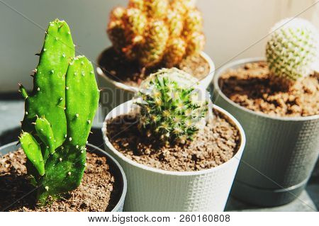 Cactus. Small cactus style with retro filter effect. Green Mood. stock photo