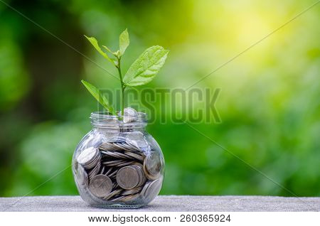 Money Bottle Banknotes Tree Image Of Bank Note With Plant Growing On Top For Business Green Natural