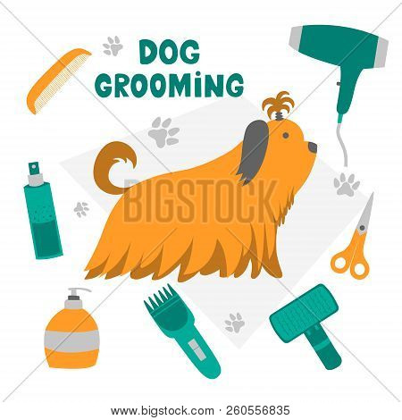 Vector illustration for pet hair salon, styling and grooming shop, pet store for dogs and cats. stock photo
