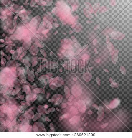 Sakura petals falling down. Romantic pink flowers gradient. Flying petals on transparent square background. Love, romance concept. Eminent wedding invitation. stock photo