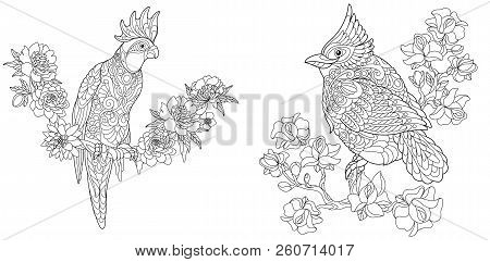 Coloring Pages Book For