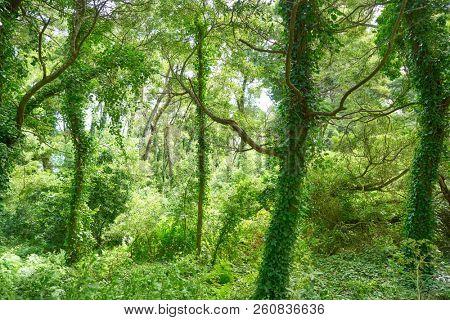 Islas Cies islands forest near Vigo of Galicia Spain stock photo
