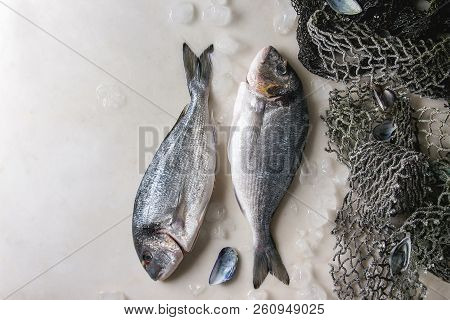 Two Raw uncooked gutted sea bream or dorado fish on ice with old sea fishing nets and shells over white marble background. Flat lay, copy space. Cooking concept stock photo