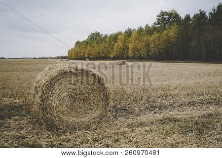 farm field with hay bales. Autumn harvest. Beveled straw on the background of the forest with colorful trees. Beautiful autumn landscape stock photo