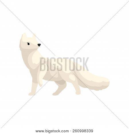 White polar fox arctic animal vector Illustration on a white background stock photo
