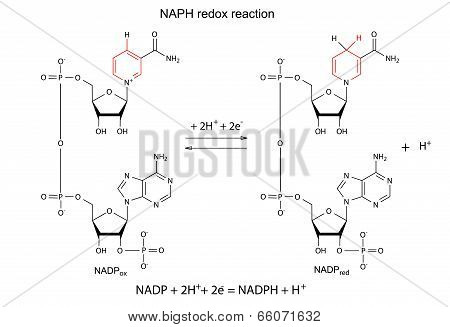 Illustration of FMN redox reaction with chemical formulas, marked variable fragments, vector, isolated on white stock photo