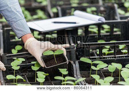 Biotechnology woman engineer with a clipboard and pen examining a plant for disease! stock photo