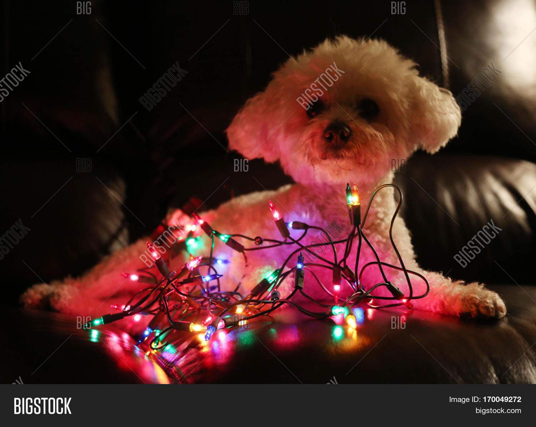 beautiful beautiful dog