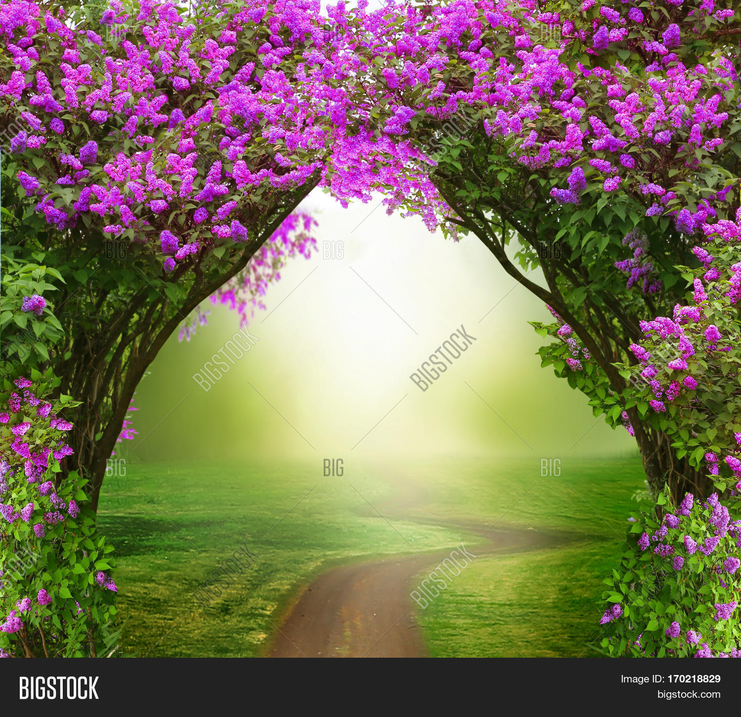 Fantasy Background Magic Forest With Roadautiful Spring