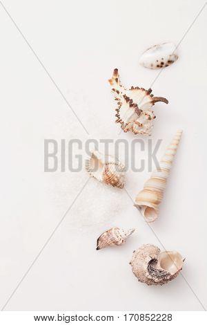 Seashells On A Pile Of Salt On White Background-Lg Fridge Magnet Skin (size 36x65)