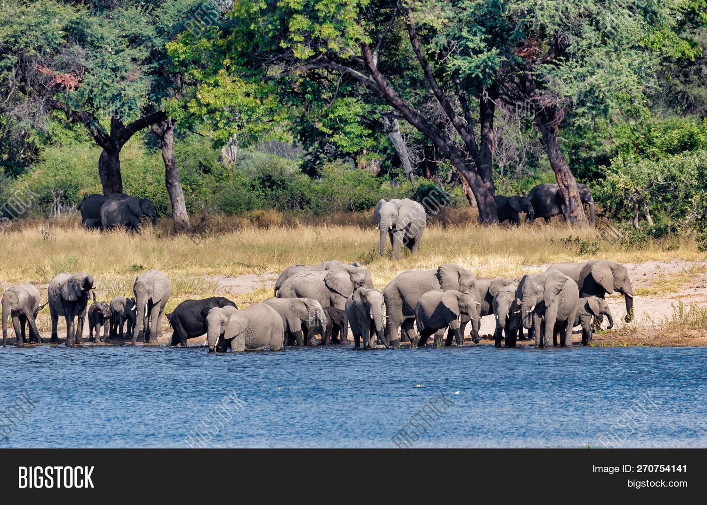 africa,african,africana,animal,baby,big,botswana,bush,bwabwata,calf,caprivi,conservation,drink,drinking,ears,elephant,game,grey,herbivore,herd,ivory,landscape,large,legs,love,loxodonta,mammal,nambwa,namibia,natural,nature,outdoors,pachyderm,park,reserve,safari,south,strip,strong,trunk,tusk,water,waterhole,wild,wilderness,wildlife,young,zimbabwe