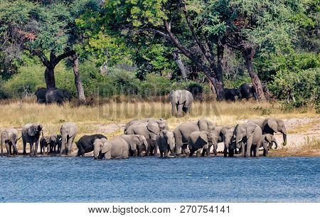 herd of African elephant with babies, Loxodonta on waterhole in Bwabwata, Caprivi strip game park, Namibia, Africa safari wildlife and wilderness stock photo