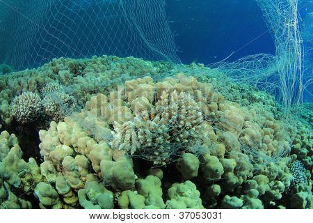 Environmental Destruction - an illegal poacher's fishing net damages coral and kills fish stock photo