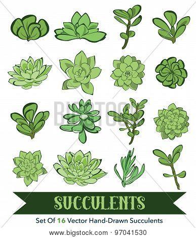 Senecio, Aeonium, Echeveria, Graptopetalum, Sedum. Vector Succulents Hand Drawn 16 Set Seamless Pattern graphic design stock photo