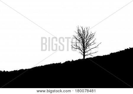 Tree on diagonal sloping heathland Posbank Rheden Netherlands. stock photo