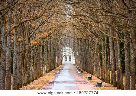 Tree Oaks Tunnel spring and the road. stock photo