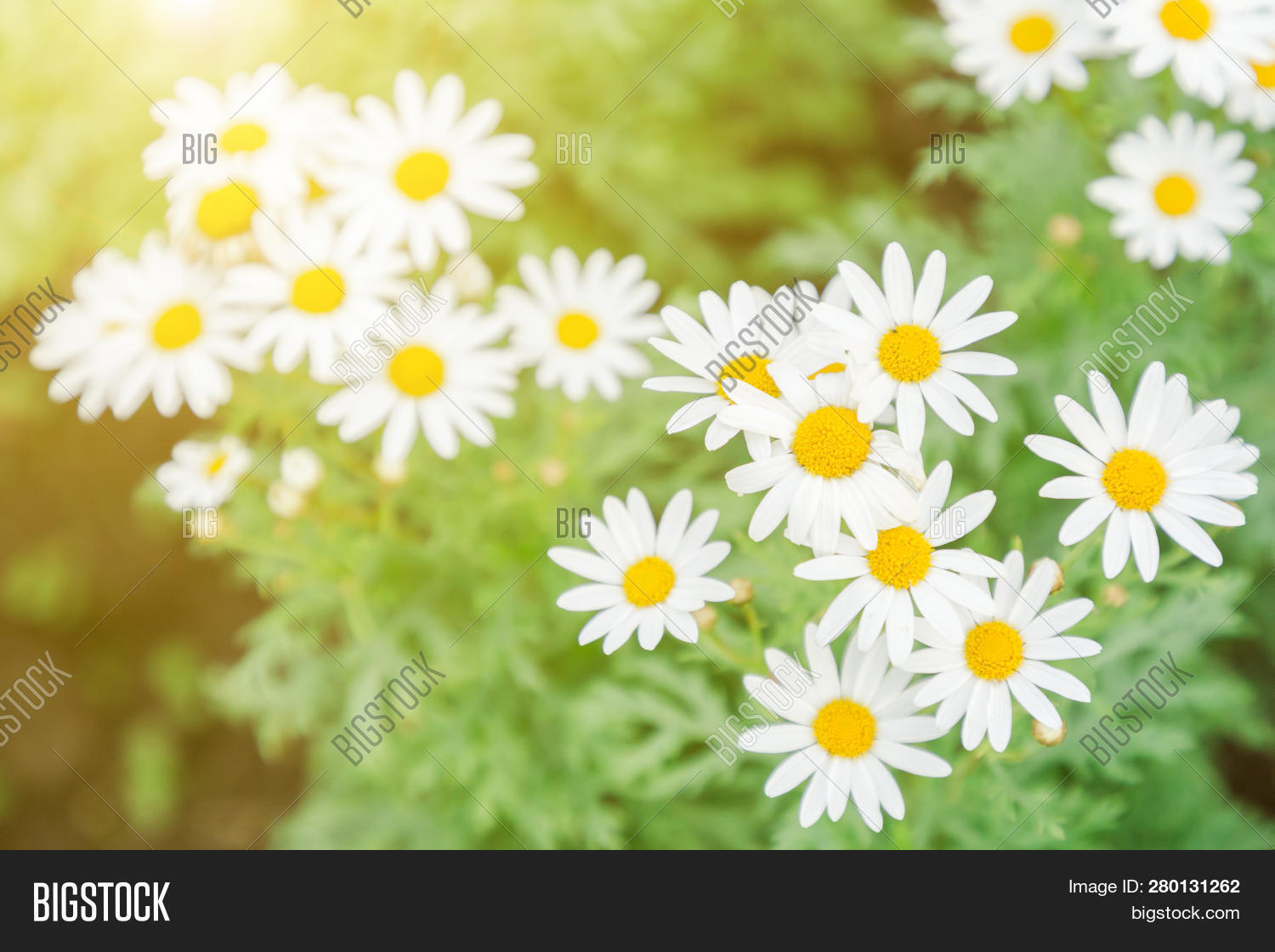 artistic,background,beautiful,beauty,blossom,border,botanical,bouquet,card,colorful-flower,composition,concept,day,decoration,equipment,floral,flower,flower-background,flower-bouquet,flower-garden,flower-pattern,forest,frame,fresh,garden,green,greeting,hobby,horticulture,leaves,mothers,nature,outdoors,pattern,plants,romantic,season,space,spring,summer,sunny,template,terrace,tree,vintage,wallpaper,watercolor,watering,wedding,white