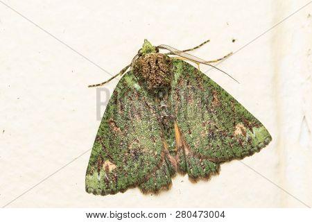 Macro image nature and unique moth of Sabah, Borneo stock photo