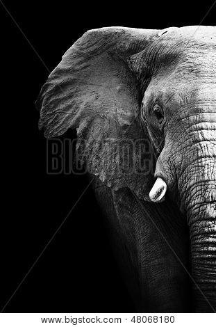 Éléphant artistique noir et blanc