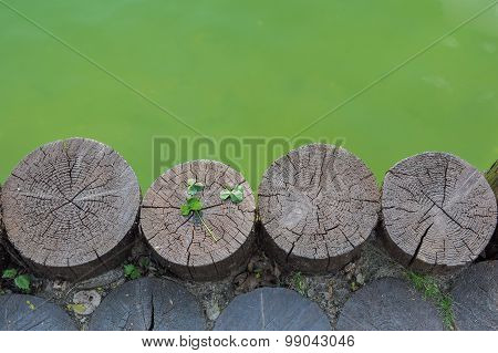 Next to waterbody located the four logs.There are three leaf clover on one of logs stock photo