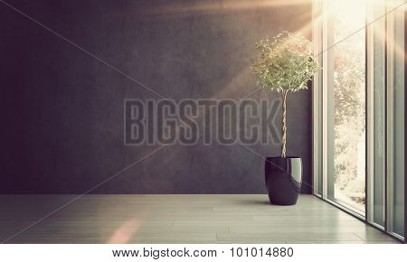 Potted House Plant in Shiny Black Pot Thriving in Empty Room with Gray Walls Next to Window with Bright Sunlight Streaming Through. 3d Rendering. stock photo