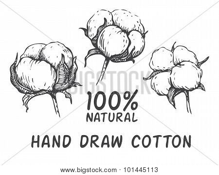 Vector set of hand draw ink cotton plant. Engraving illustration. Can be used as decor ellement for a rustic wedding or greeting cards stock photo