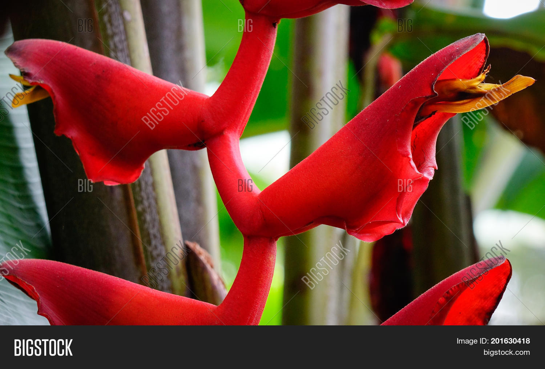 abstract,art,asia,asian,background,big,botany,brazil,caribbean,circle,circular,exotic,flower,foliage,form,giant,gigantic,green,hawaii,leaf,life,lines,madagascar,madagascariensis,nature,orange,outdoors,paint,palm,pattern,plant,ravenala,relaxing,round,shape,singapore,strelitziaceae,stripes