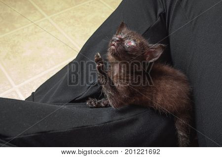 A dark colored feral kitten with a congenital herpes eye infection looks up with one paw extended Heavenward. stock photo