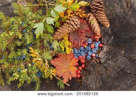 autumn still life of fruit blueberry and lingonberry with a sprig of junipercone and leaves on an old stump stock photo
