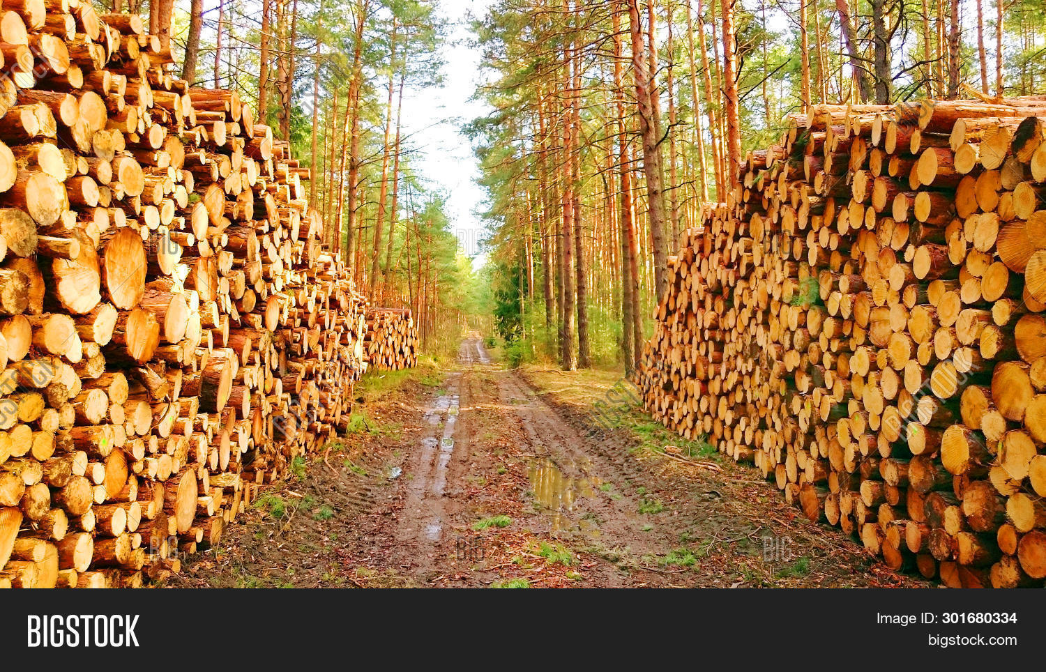 agriculture,alternative,alternative energy,alternative fuel,biomass,business,commodity,deforestation,ecology,ecosystem,energy,environment,fire wood,firewood,forest,forestry,fuel,harvest,harvesting,heating,industry,log,lumber industry,lumber mill,lumber wood,lumber yard,lumberjack,material,natural,nature,pine,product,renewable energy,road,saw,source,spruce,stack,stack of wood,sustainability,sustainable,sustainable development,sustainable energy,timber,tree,trunk,winter,wood,wooden,woodland