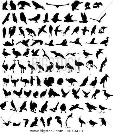 A hundred Silhouettes of different birds. Vector stock photo