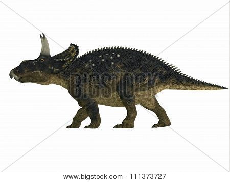 Nedoceratops is a herbivorous ceratopsian dinosaur that lived in the Cretaceous Period of Wyoming North America. stock photo