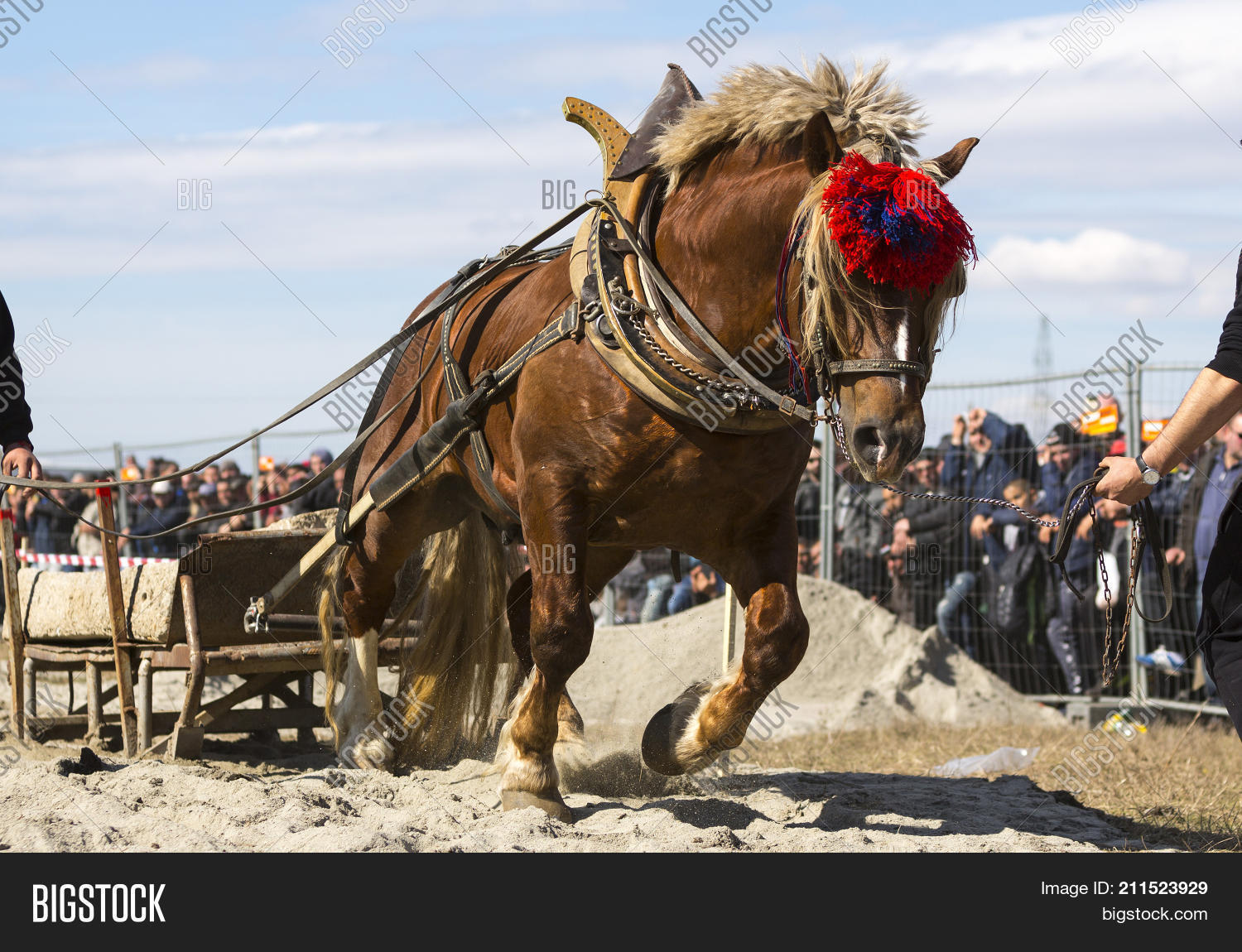Gipsy,Gypsy,Rom,Romany,abuse,active,activity,animal,big,blue,compete,competition,cultural,culture,drag,drawing,extreme,fast,hard,heavy,horse,load,man,men,owner,participate,person,pull,pulling,race,run,running,rural,sand,scene,sky,speed,sport,stones,strenght,strong,strongerst,tournament.,track,tradition,traitional