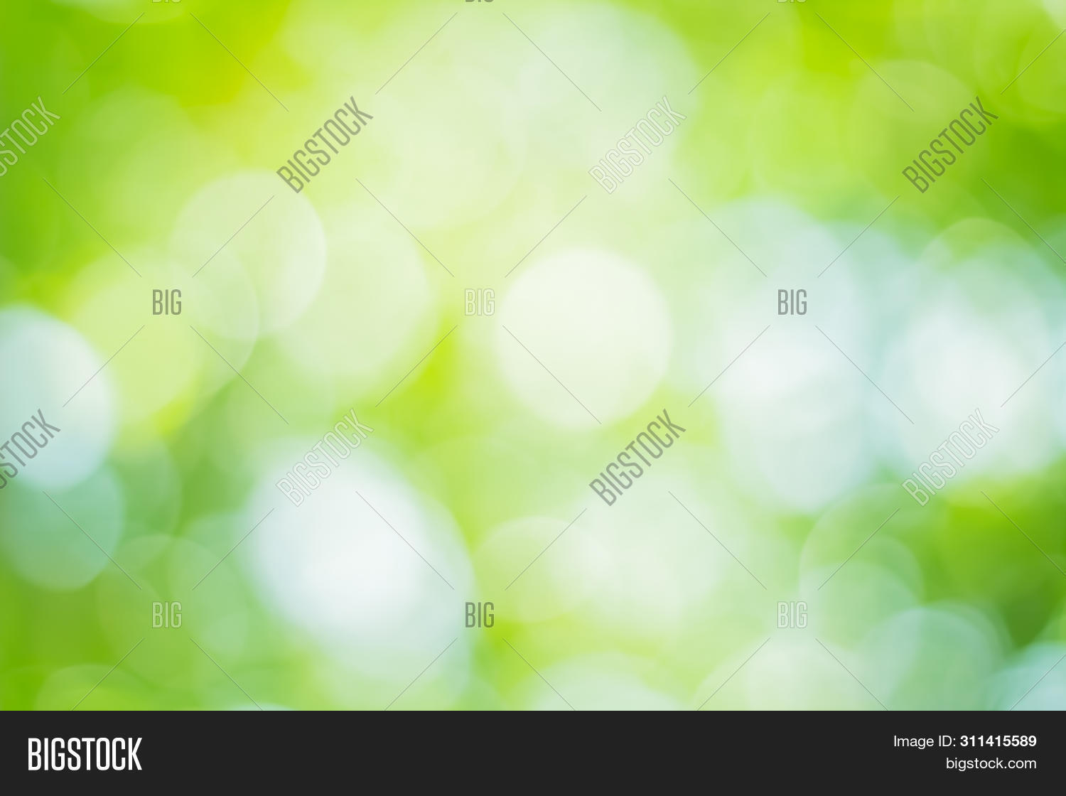 abstract,art,background,beautiful,beauty,blur,blurred,bokeh,bright,color,colorful,concept,day,design,ecology,effect,environment,flora,focus,foliage,forest,fresh,freshness,garden,grass,green,growth,healthy,leaf,leaves,light,lush,natural,nature,nobody,pattern,plant,season,shape,shiny,soft,space,spring,summer,sun,sunlight,sunny,sunshine,texture,white